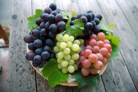 宮若市的葡萄
