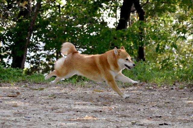 Hesitation dog